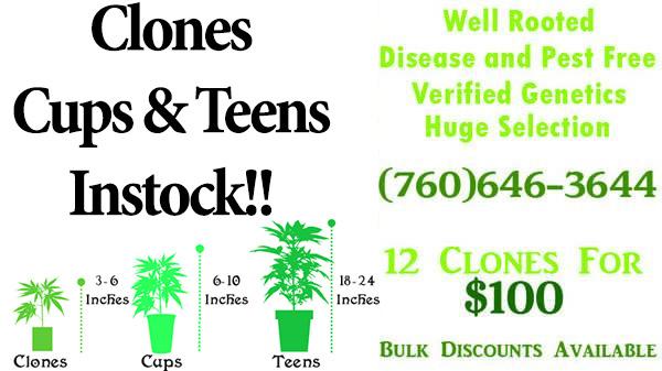 Marijuana Clones and Plants For Sale in San Bernardino   High Desert